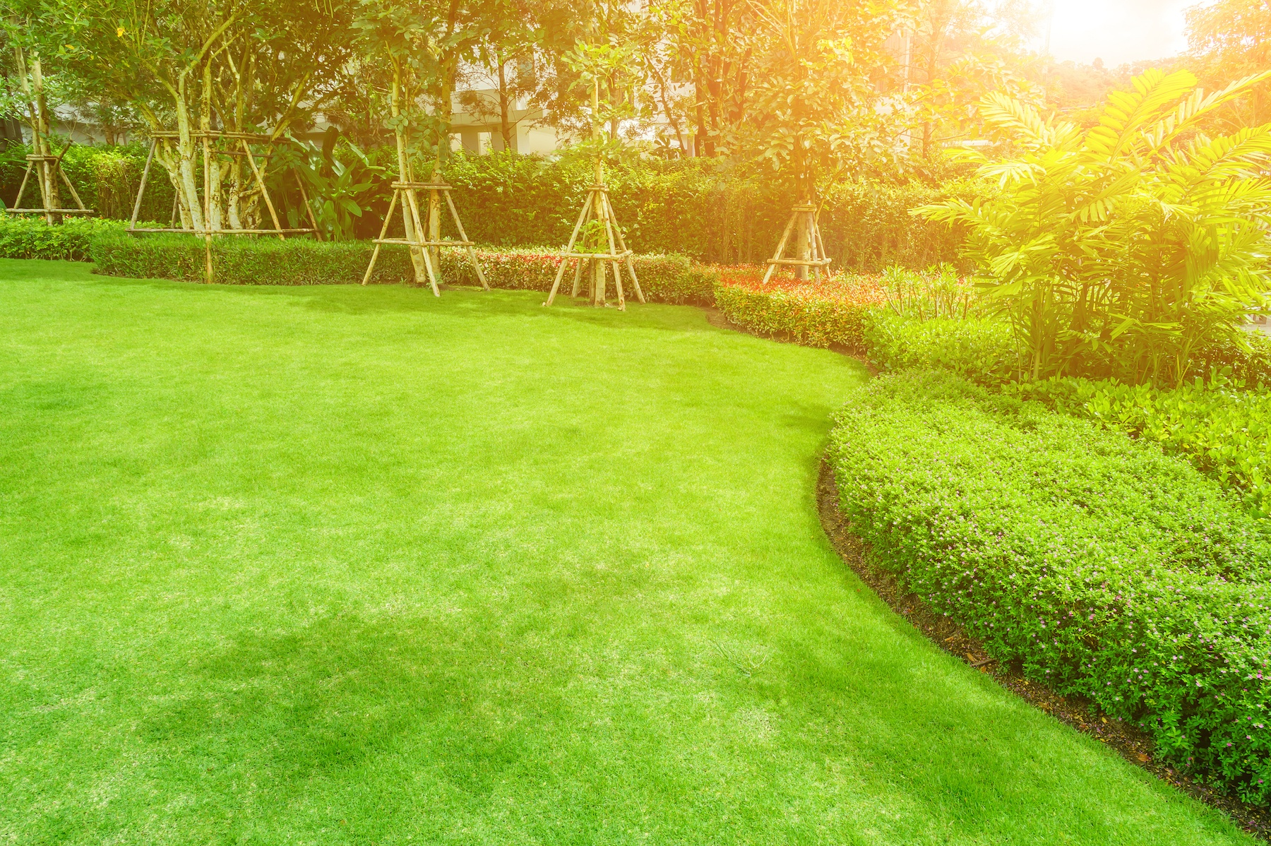 Proactive Lawn Care Tasks to Put on Your To-Do List | The Experienced Gardener-1