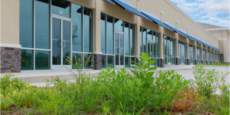 Protect Your Business from the Eyesore that Weeds Create | The Experienced Gardener
