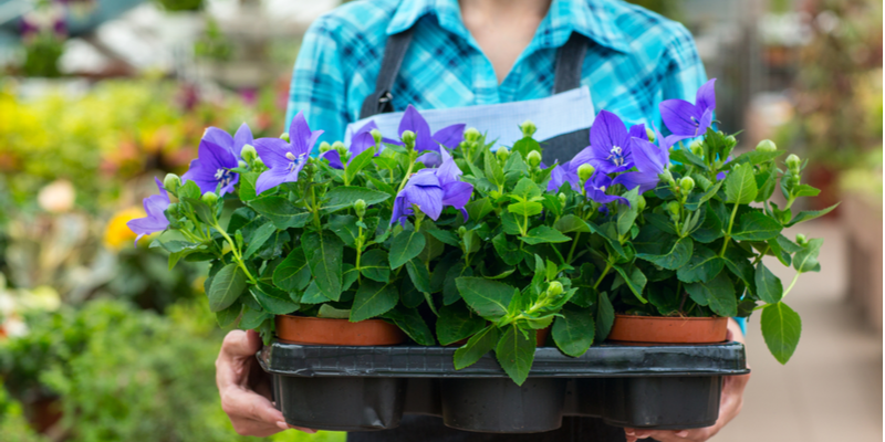 Reasons to Invest in Professional Gardening Services Even if You Have a Small Yard | The Experienced Gardener