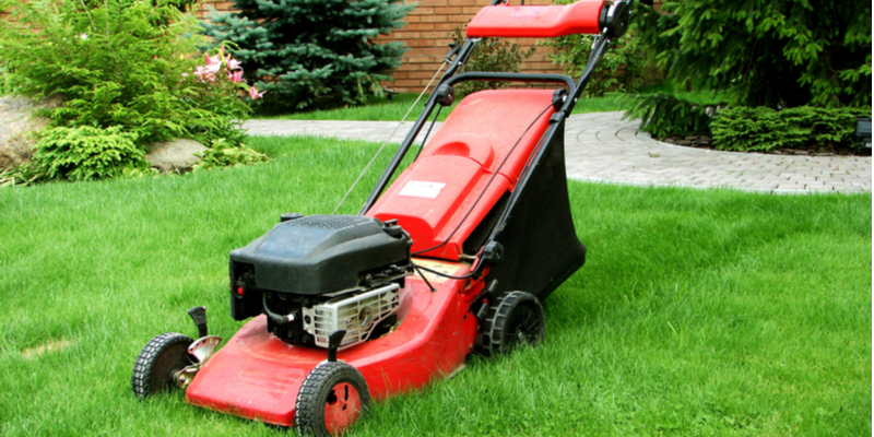 Simple Tasks that Will Keep Your Yard Healthy | The Experienced Gardener