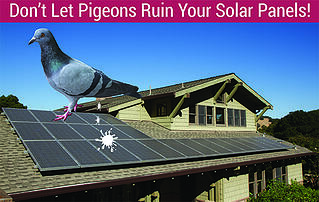 Stop Pigeons From Ruining Your Solar Panels