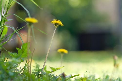 Taking Out Weeds In 3 Steps | The Experienced Gardener