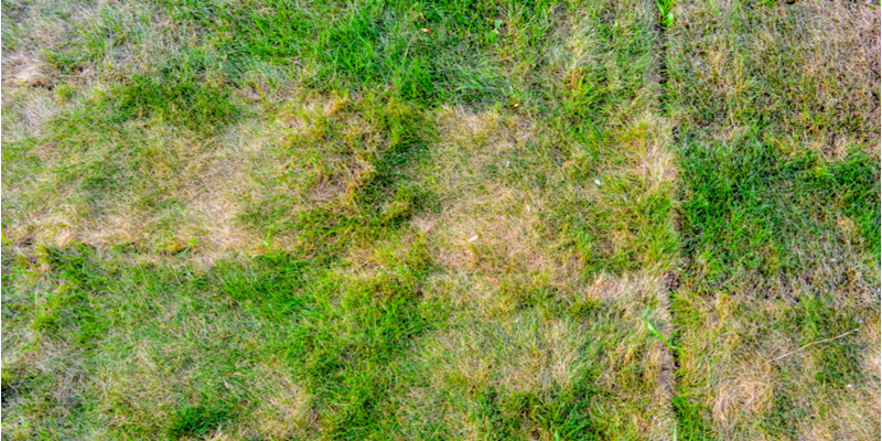 The Top Threats to the Health of Your Landscape | The Experienced Gardener