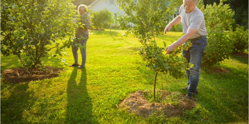 Three Reasons You Should Bring in Professional Help for Tree Care | The Experienced Gardener