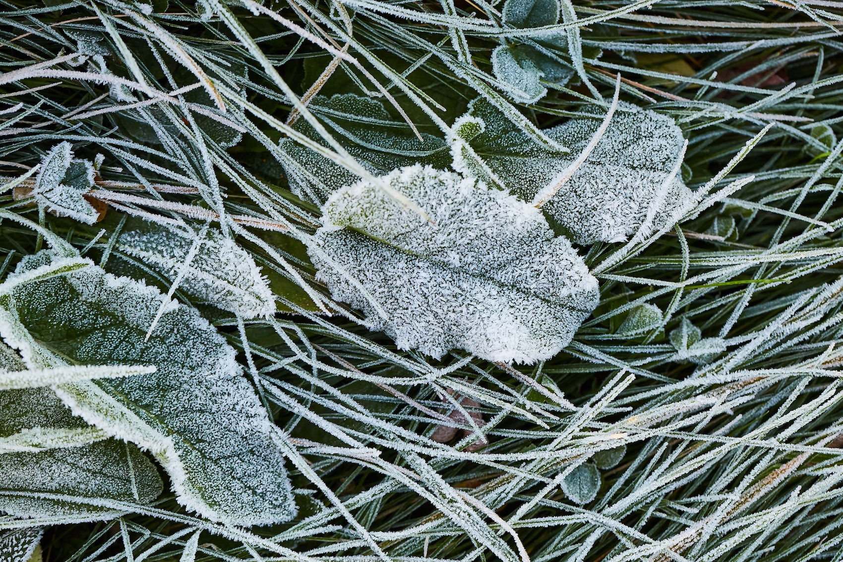 Three Reasons You Shouldn't Ignore Your Yard During the Colder Months | The Experienced Gardener