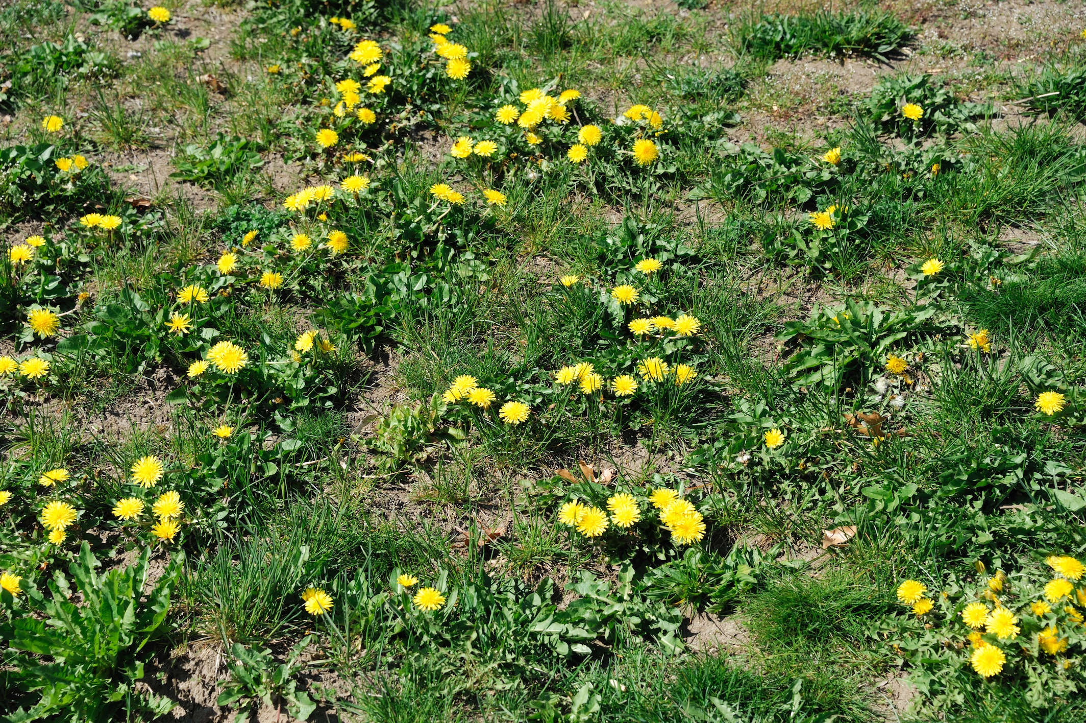 Three Steps To Less Weeds | The Experienced Gardener