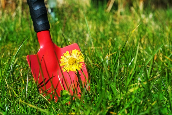 Keeping Weeds Out of Your Lawn For Good | The Experienced Gardener