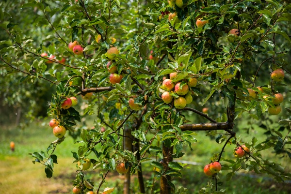 What Do I Need to Know About Managing My Property's Tree Growth? | The Experienced Gardener