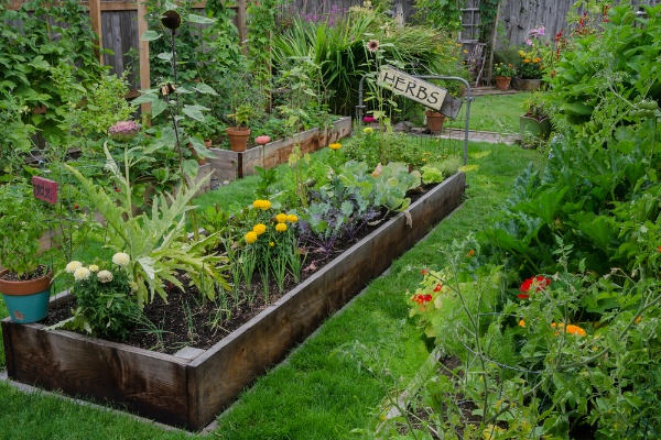 Vegetable Gardening 101: The Do's and Don'ts | The Experienced Gardener