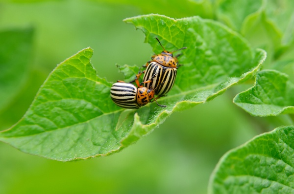 What Should I Do To Keep Insects From Infesting My Lawn? | The Experienced Gardener