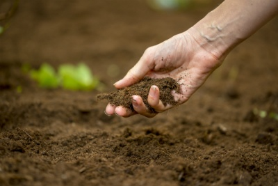 Why Do You Need to Use Fertilizer? | The Experienced Gardener