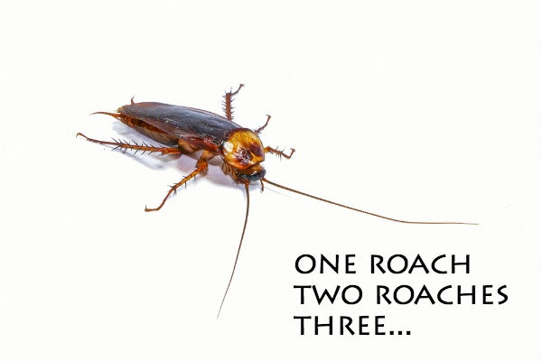 See One Roach