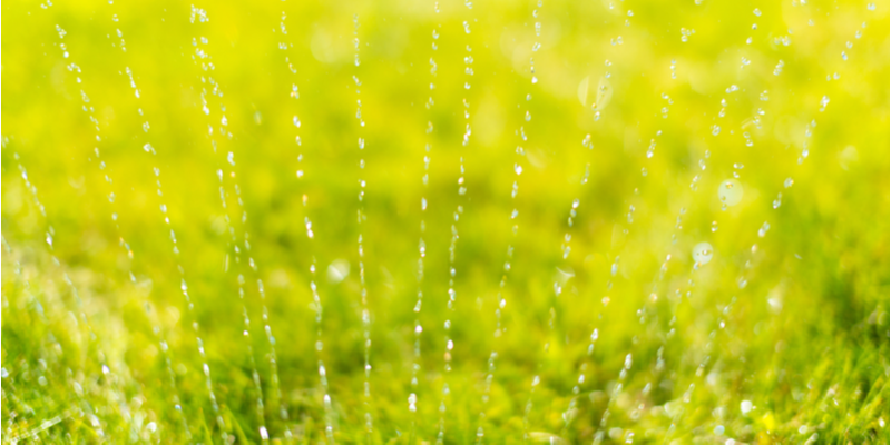 Want a Healthy Lawn? Heres What You Should Do | The Experienced Gardener