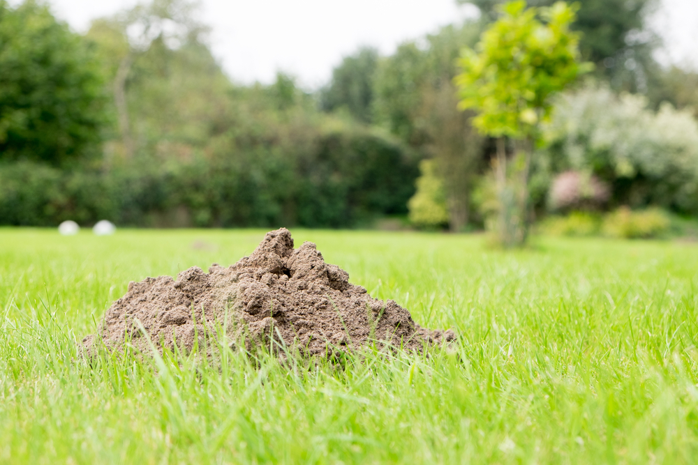 What Are My Options for Dealing with Rodents in My Yard | The Experienced Gardener