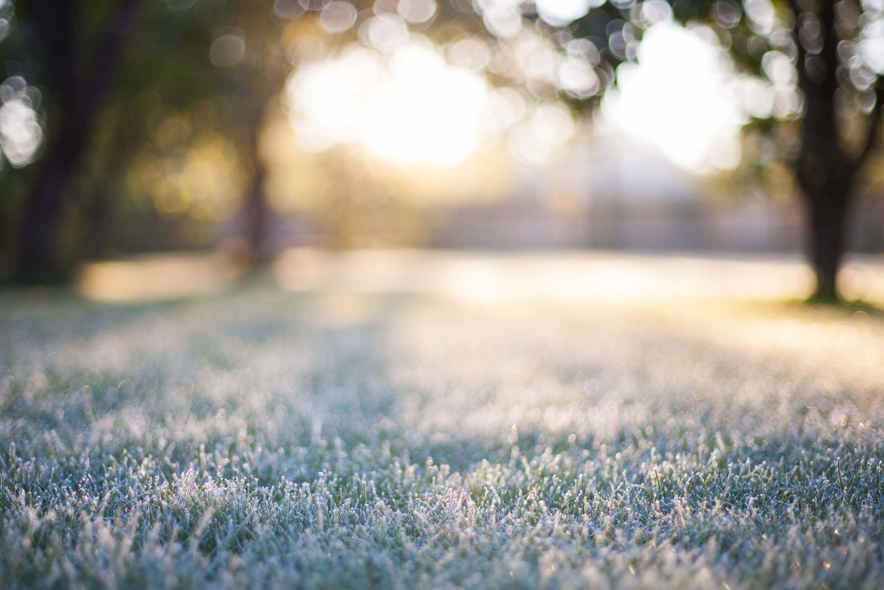 What Can I Do for My Yard in the Winter | The Experienced Gardener