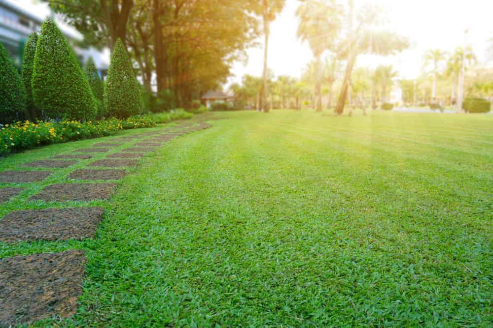 Why Isn't My Grass Growing? | The Experienced Gardener