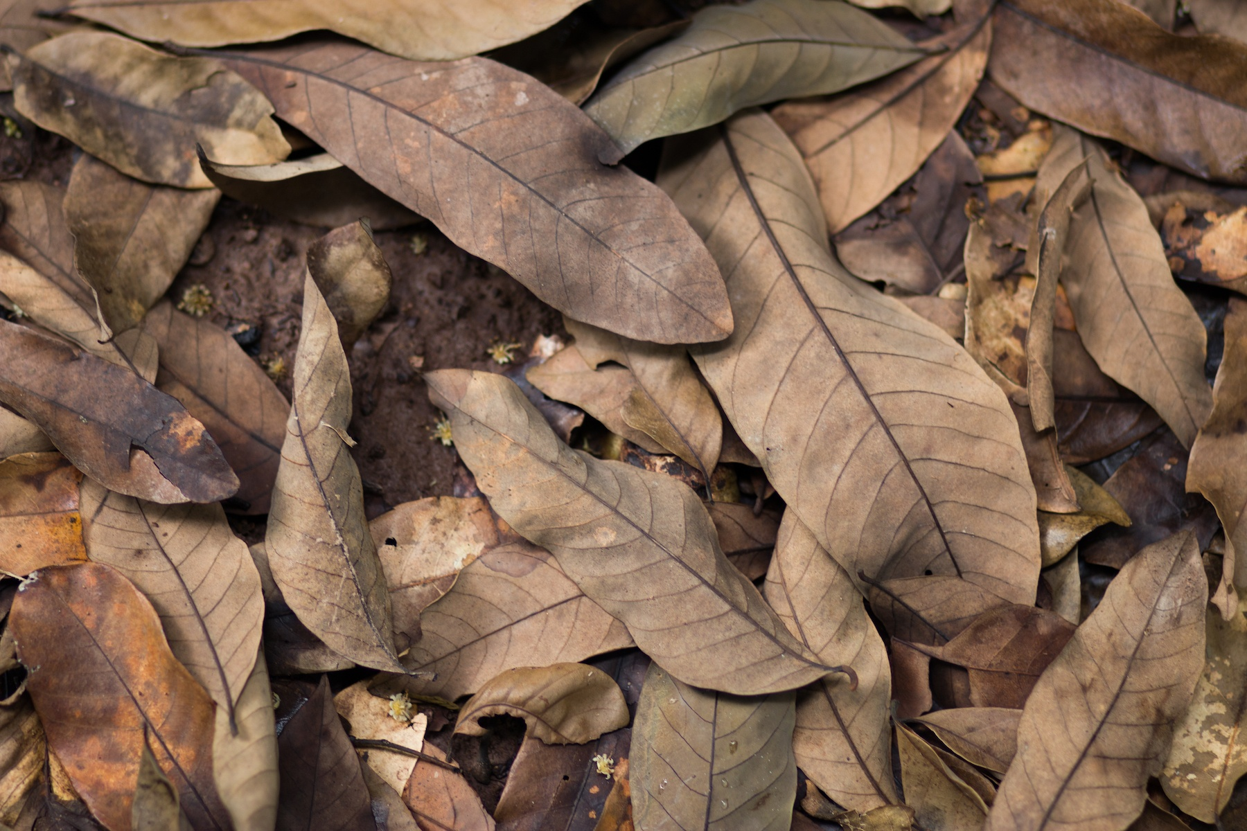 Will a Blanket of Dead Leave Harm My Yard? | The Experienced Gardener