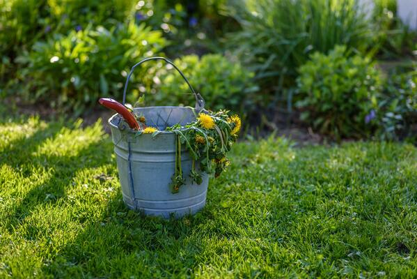 Will the Weeds in My Yard Go Away Once It Cools Down | The Experienced Gardener