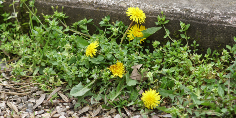 Is Weed Control Needed During the Spring
