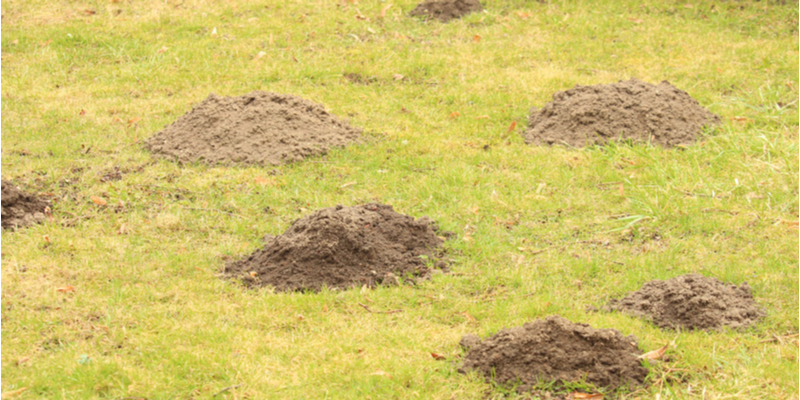 What Types of Pests are the Biggest Threat to My Lawn? | Experienced Gardener