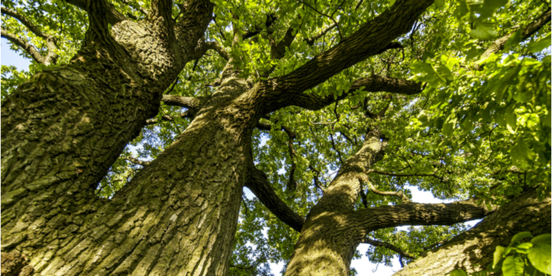 How Does Overgrowth Threaten the Health of Trees | Experienced Gardener