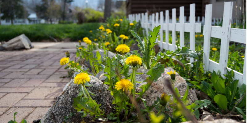 Tips for Keeping Weeds from Taking Over the Yard | Experienced Gardener