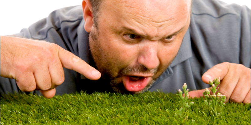 Ways You Are Inadvertently Encouraging Weeds to Grow In Your Yard | Experienced Gardener
