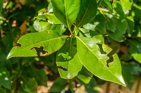 Yard Bugs Signs and Prevention  | The Experienced Gardener