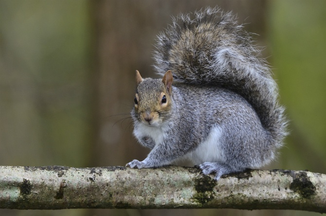 Can Squirrels Be Harmful to Your Yard? | The Experienced Gardener