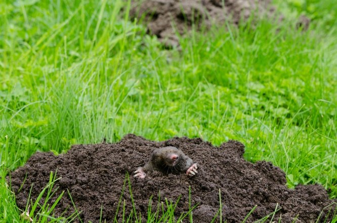 Common Lawn Pests and How to Eliminate Them | The Experienced Gardener