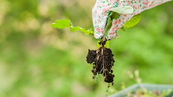What Should I Do To Reduce Weeds? | The Experienced Gardener