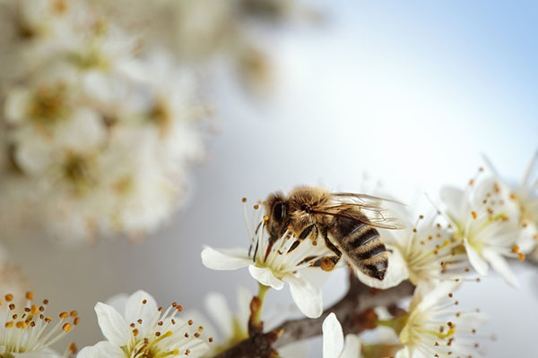 Are Mosquitos, Bees, And Wasps More Common During June? | San Joaquin Pest Control