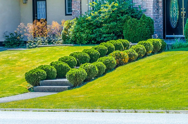 How Do I Keep Pests Away from my Garden? | The Experienced Gardener
