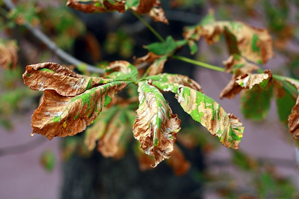 Way to Recognize Disease in Your Plants and Trees | The Experienced Gardener