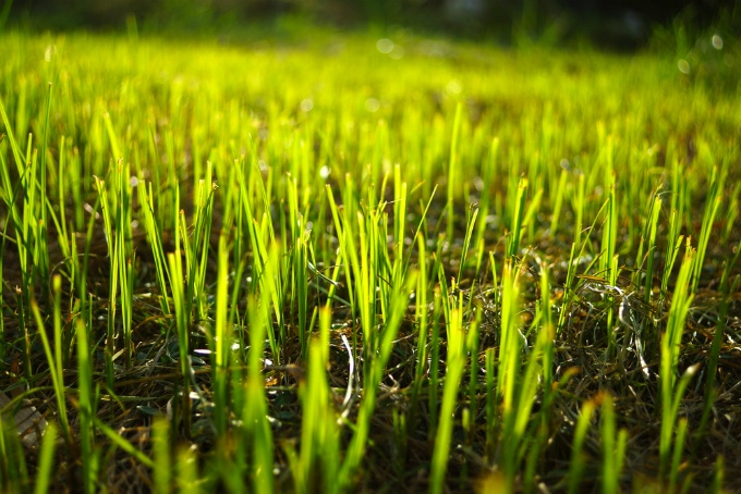 Everything You Need to Know About Fertilizing Your Lawn | The Experienced Gardener