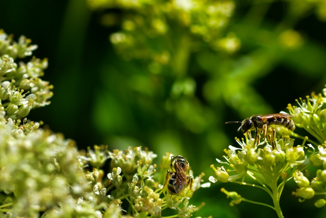 Four Reasons Why Insects May Be Infesting Your Garden | The Experienced Gardener