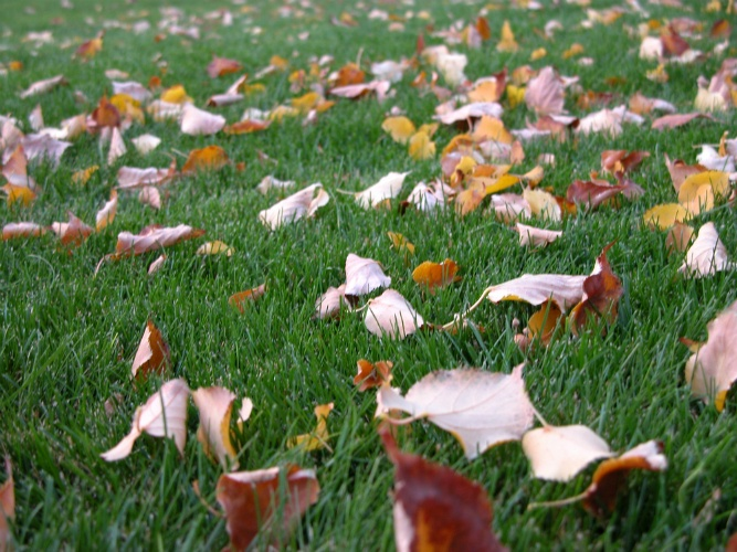 How Do You Know If Your Lawn Needs to Be Aerated? | The Experienced Gardener