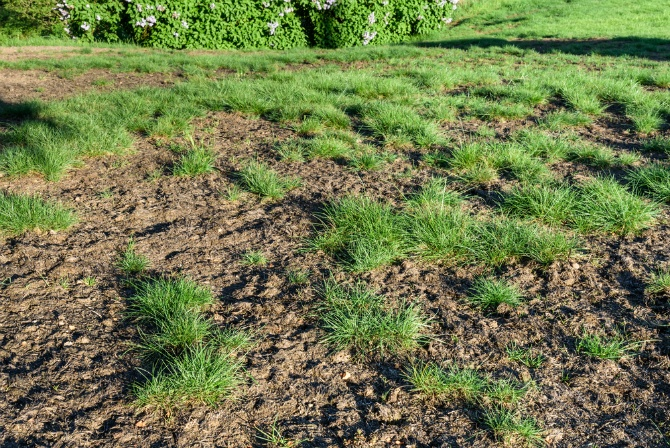 How to Spot and Get Rid of the Most Common Lawn Pests | The Experienced Gardener