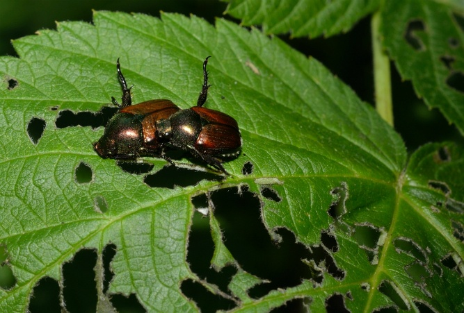 Is Your Garden Susceptible to Bug Infestations? | The Experienced Gardener