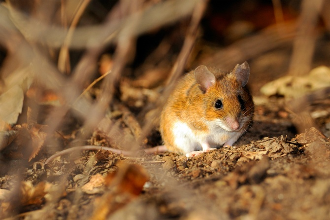 Keeping Voles Out of Your Garden | The Experienced Gardener
