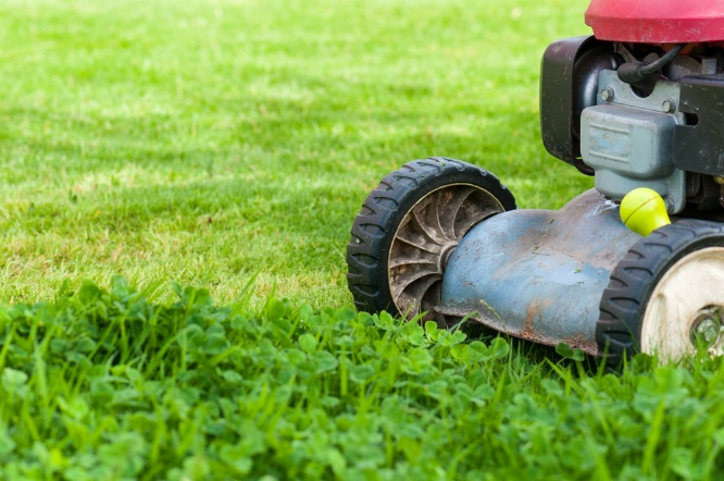 Lawn Care: Should You Try to Handle it Yourself? | The Experienced Gardener