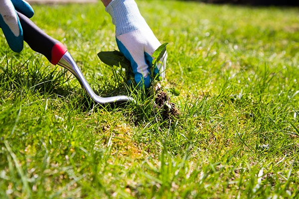 4 Things That Might Be Causing Weeds In Your Lawn | The Experienced Gardener