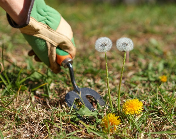 Get Rid Of Weeds In Your Lawn | The Experienced Gardener