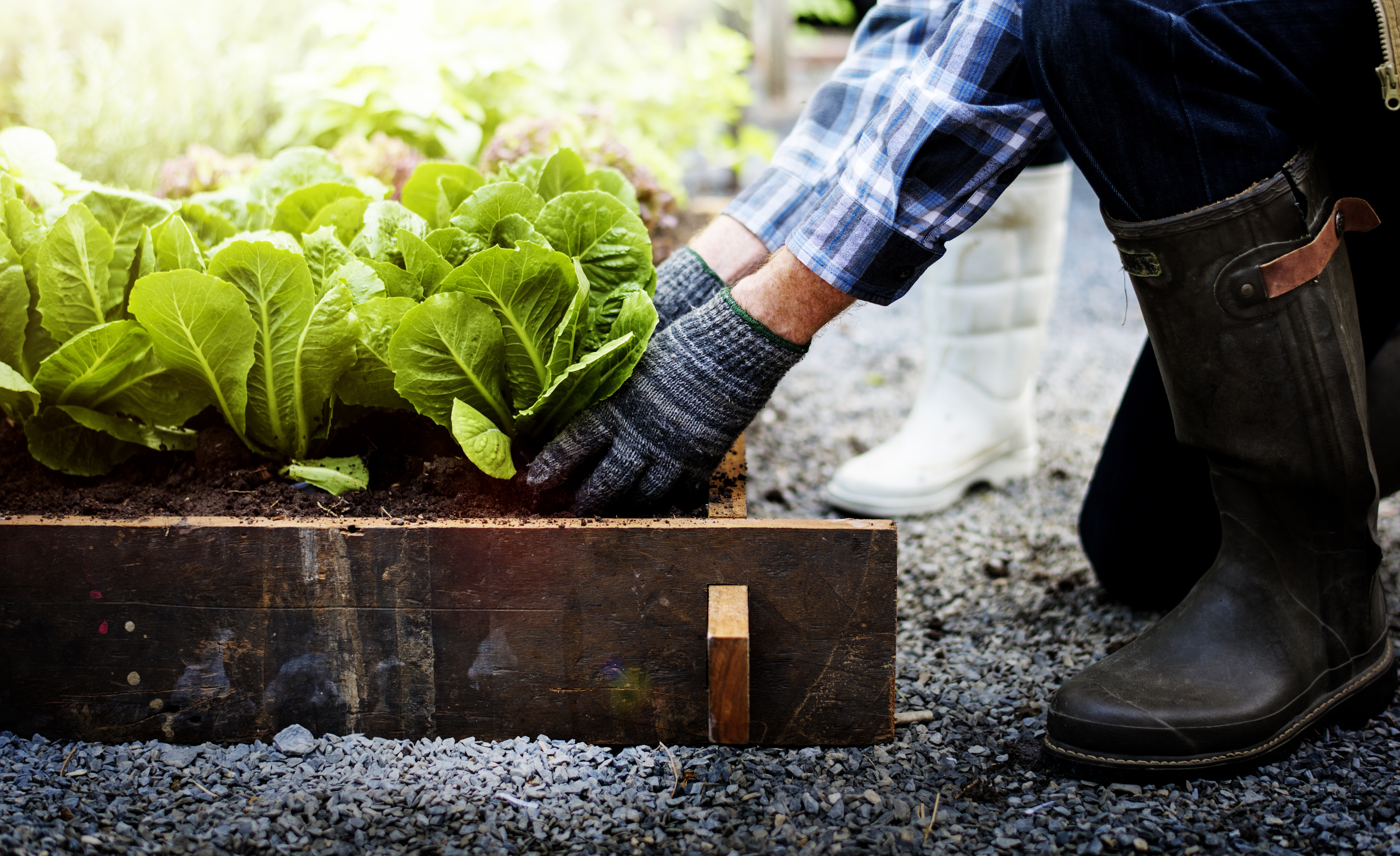Getting Your Vegetable Garden Ready For Summer | The Experienced Gardener