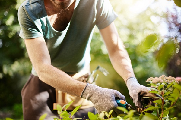 Garden Chores For The Hotter Months | The Experienced Gardener