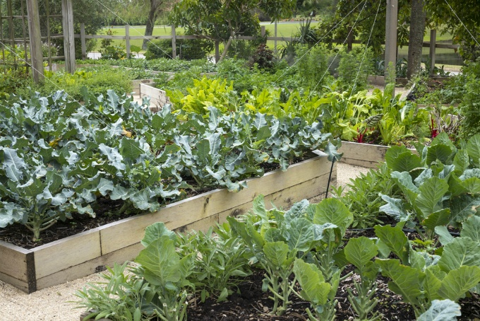 The Do's and Don'ts of Vegetable Gardening | The Experienced Gardener