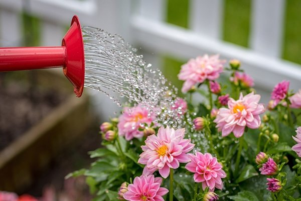 3 Things To Buy If You're Starting A Garden | The Experienced Gardener