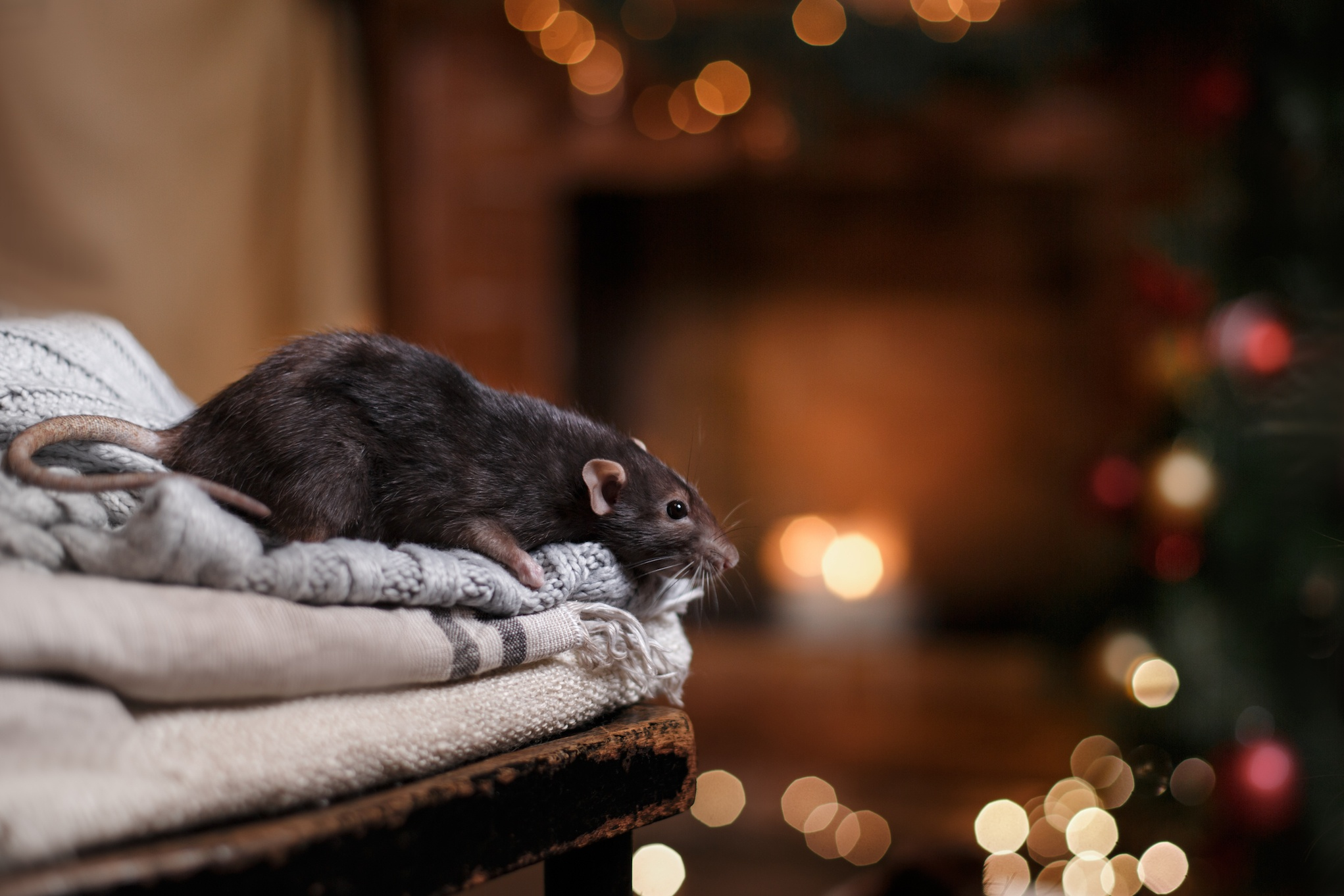 Keep Rodents Out of Your House with These Steps