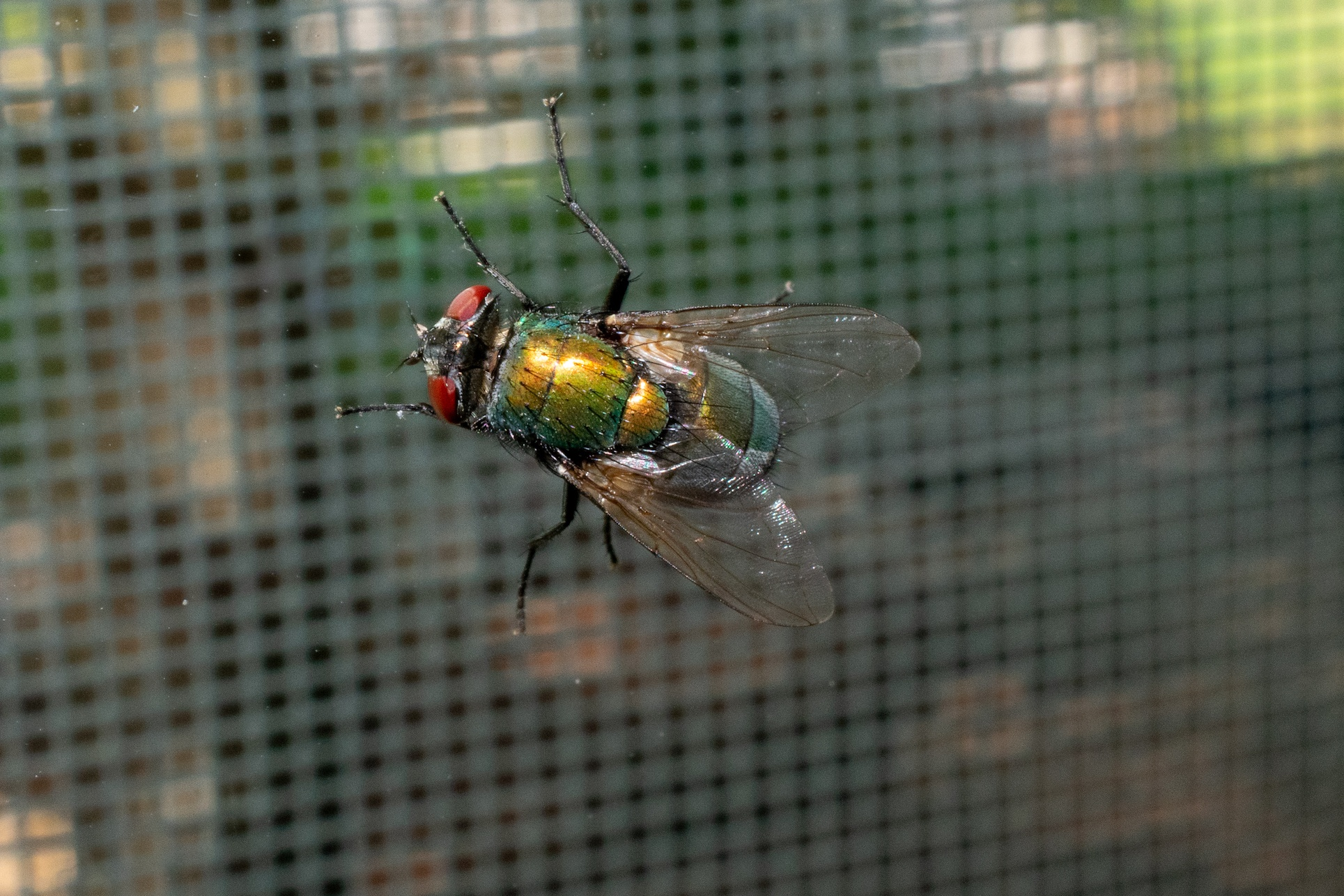 Why Are There So Many Flies In Summer San Joaquin Pest Control